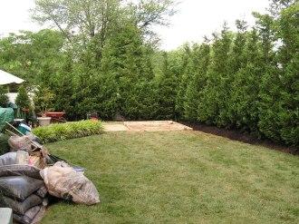 Big Leyland Cypress Fence
