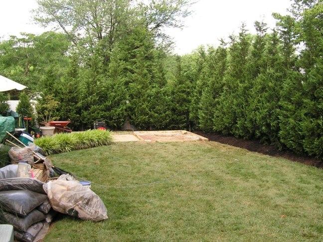 Big Leyland Cypress Femce