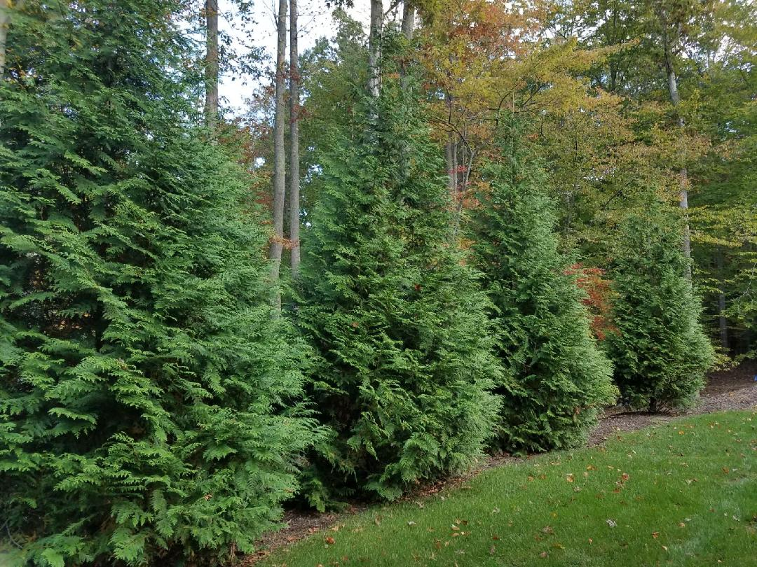 There Is Still Time To Have Your Living Fence Installed Before Year End!